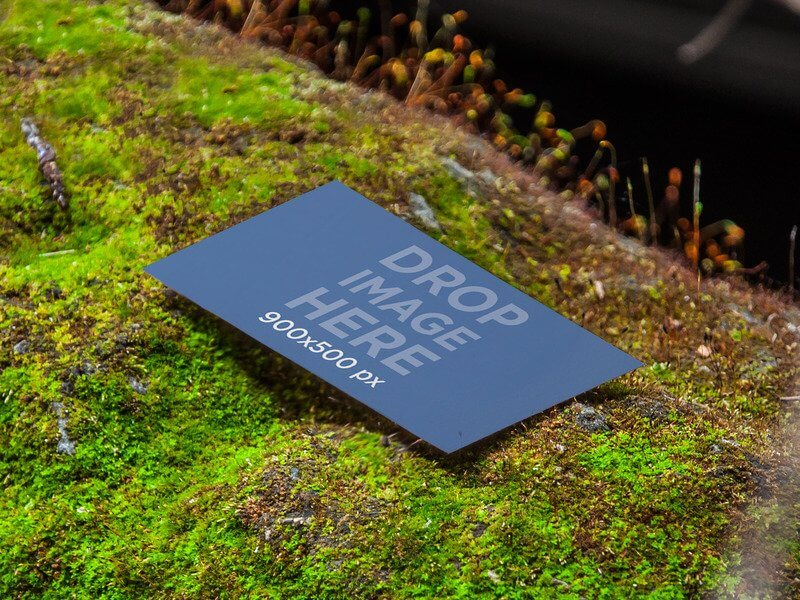 PRINT DESIGN MOCKUP, BUSINESS CARD LAYING ON A BED OF MOSS